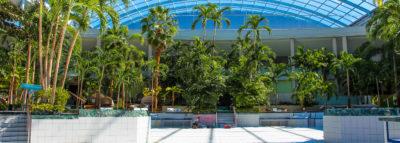 große Lagune ohne Wasser mit Palmen bei Sonnenschein