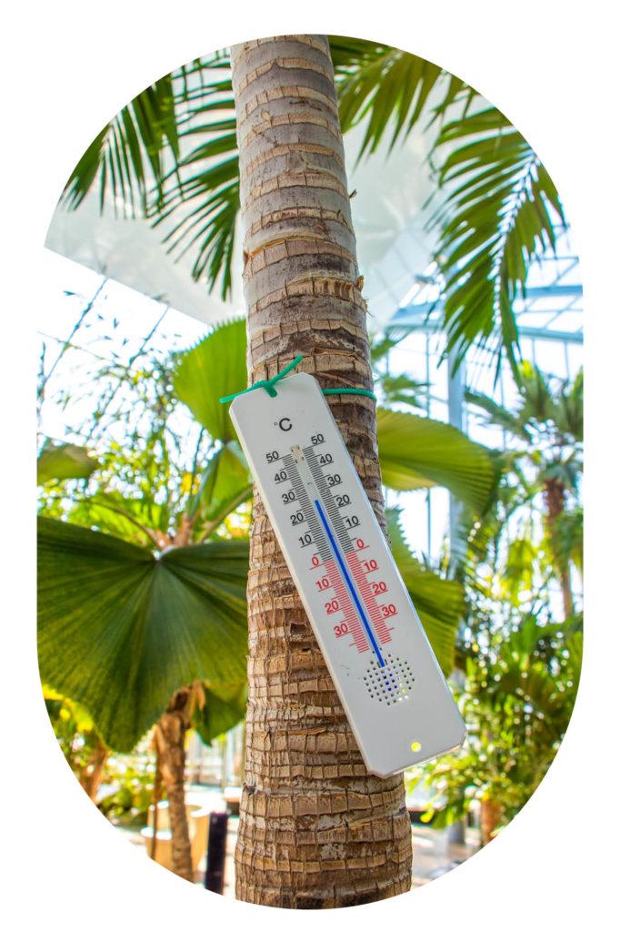 Thermometer an einer Palmen in der Therme